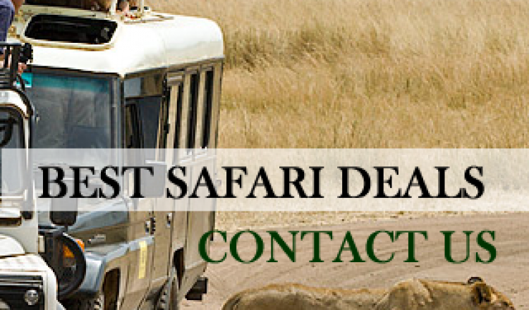 For Amazing Safari Deals-kenya safari packages