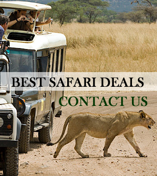 Best kenya safari deals